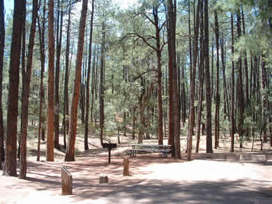 Ponderosa campground is surrounded by the largest stand of ponederosa pines in the world.