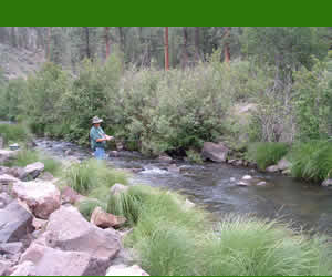 Top 10 campgrounds in the white mountains for fly fishing for Best fishing in arizona
